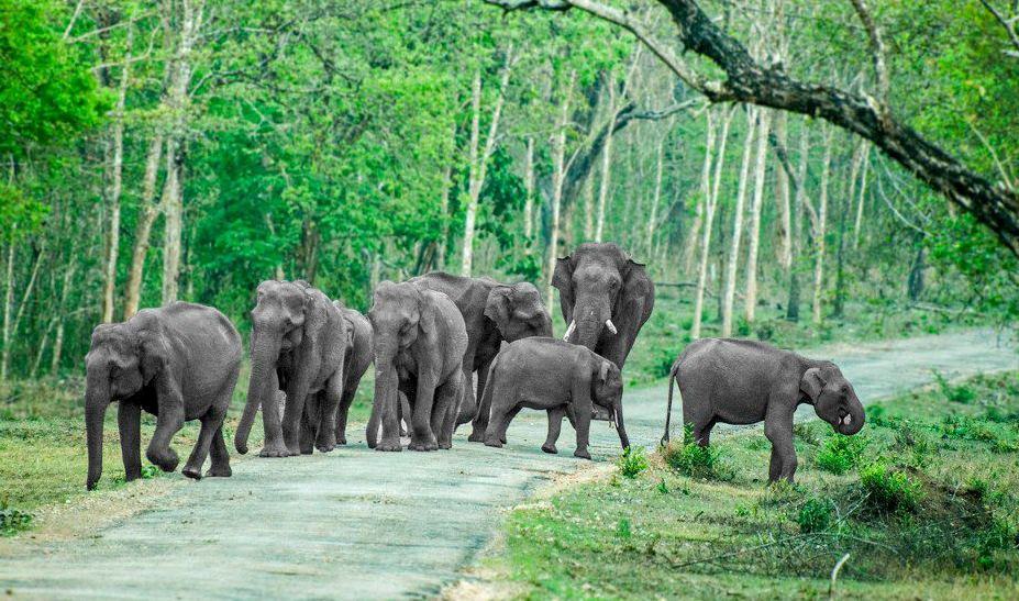 elephants,outstation cabs bangalore,cab services in bangalore,car for rent in bangalore,rental cars,bangalore car rent,bangalore cab services